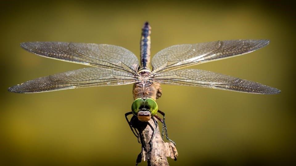 Hor voor deur insectenwering