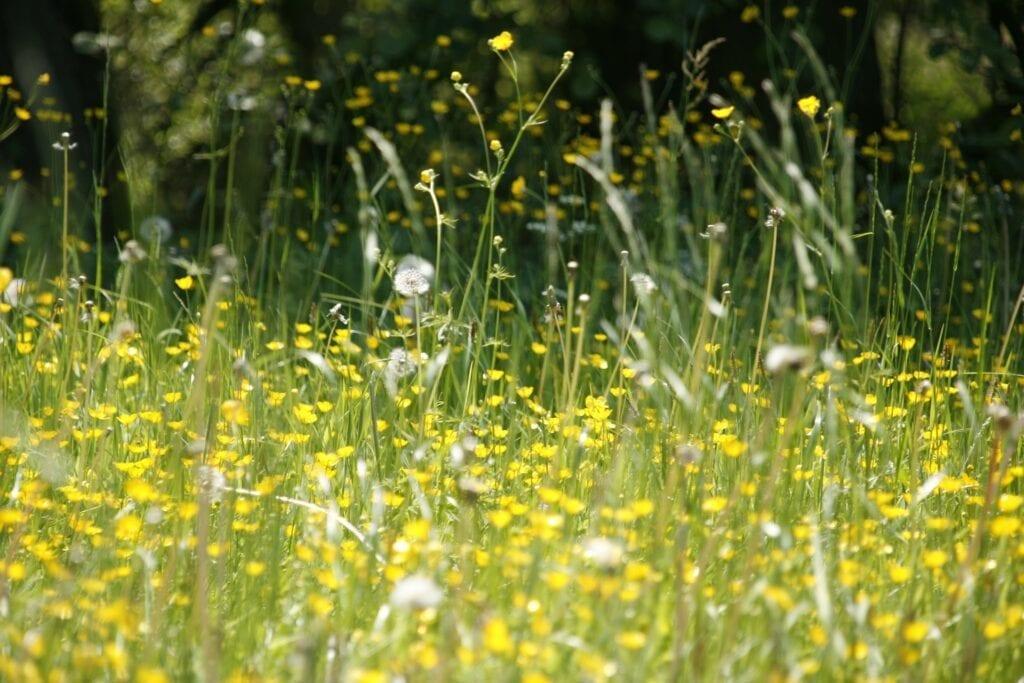 Wat is pollengaas?