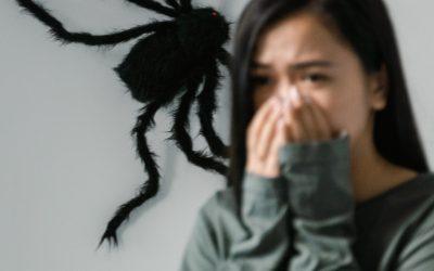 Het spinnenseizoen – wat nu?