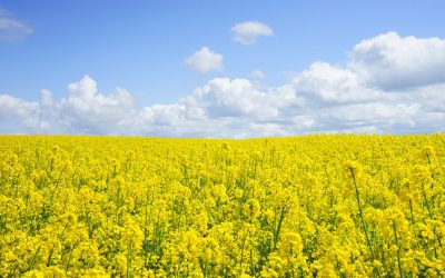 Pollen en hooikoorts – drama!